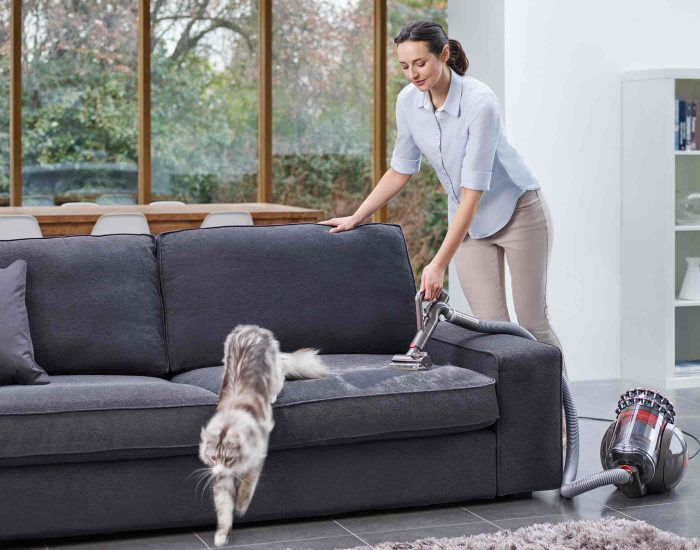 Dyson CBIGBALLANIMALPLUS Barrel Vacuum Clean Couch